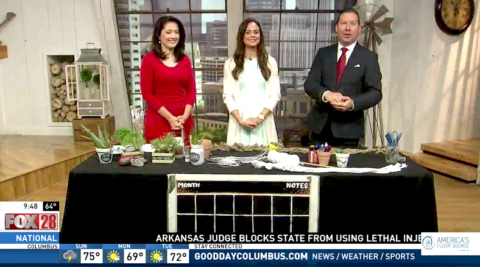 Springtime DIY Crafts on Good Day Columbus {Fox 28} – 4/15/17