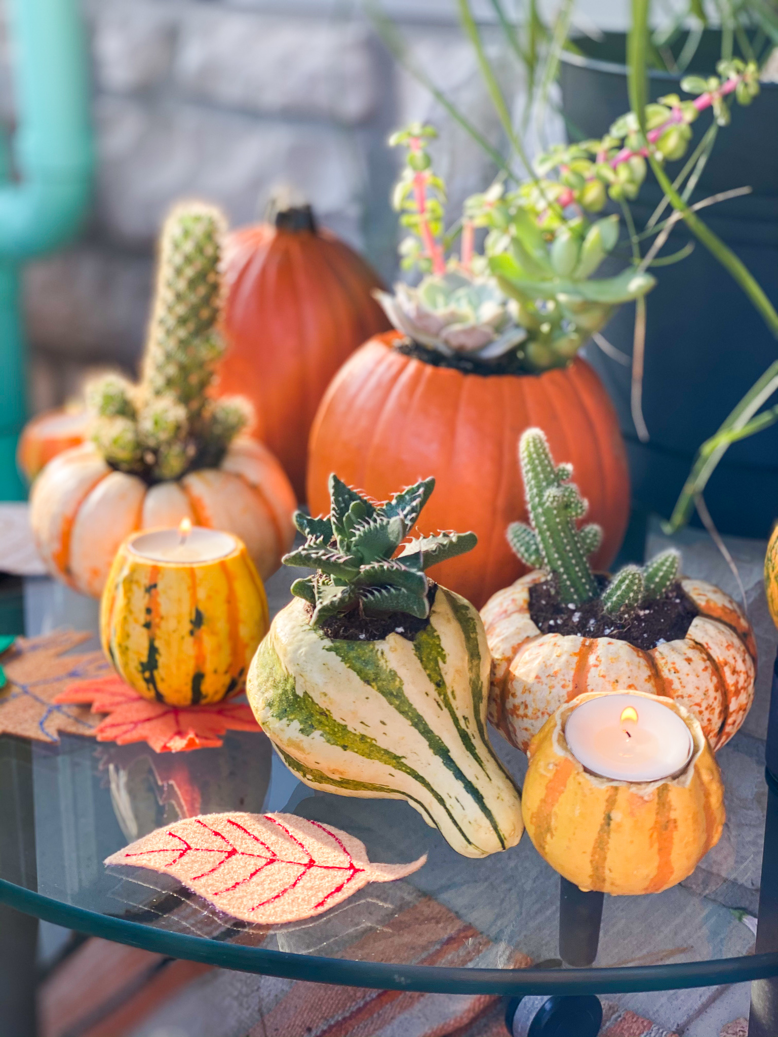 Pumpkin & Gourd Crafts with Megan Pando on Good Day Columbus {Fox 28} - 10/11/20